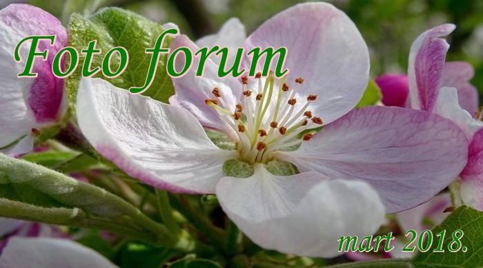 Foto-forum u slici - Page 28 1rrrrr17