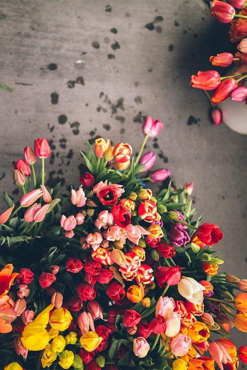 Cveće - Page 5 30079910