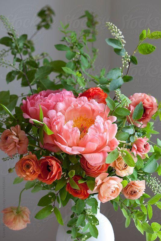 Cveće 8eba4210