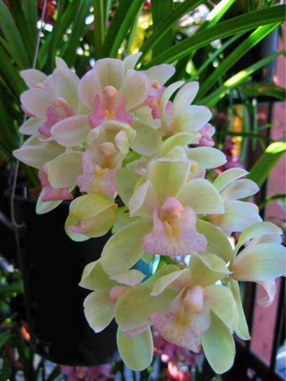 Cveće B936f211