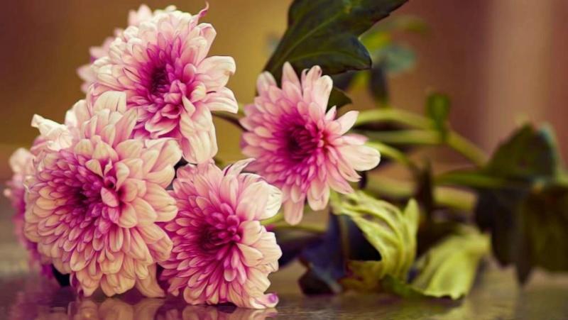 Cveće - Page 5 Cvet810