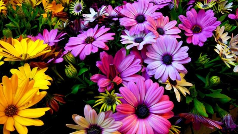 Cveće - Page 5 Cvet910