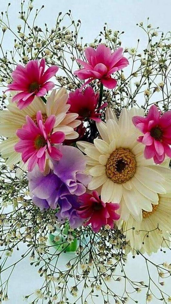 Cveće - Page 5 Dc724310