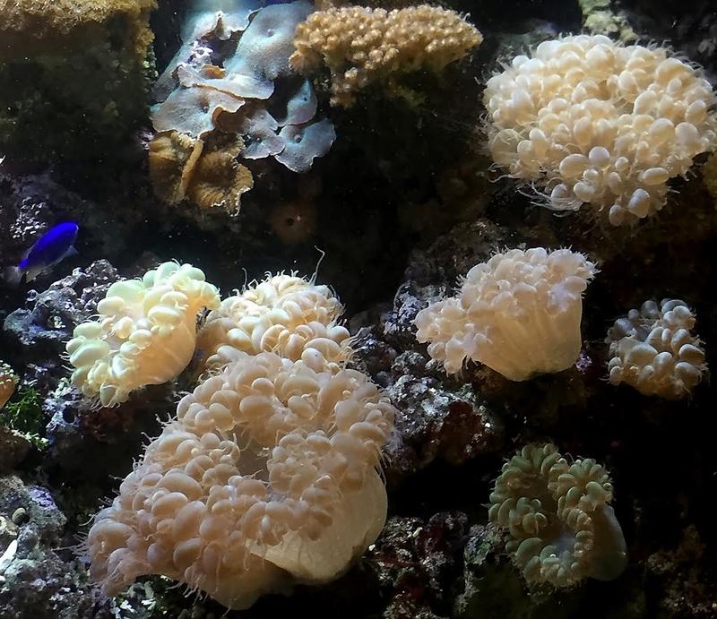 Podvodni svet (osim riba) - Page 4 Dno1110