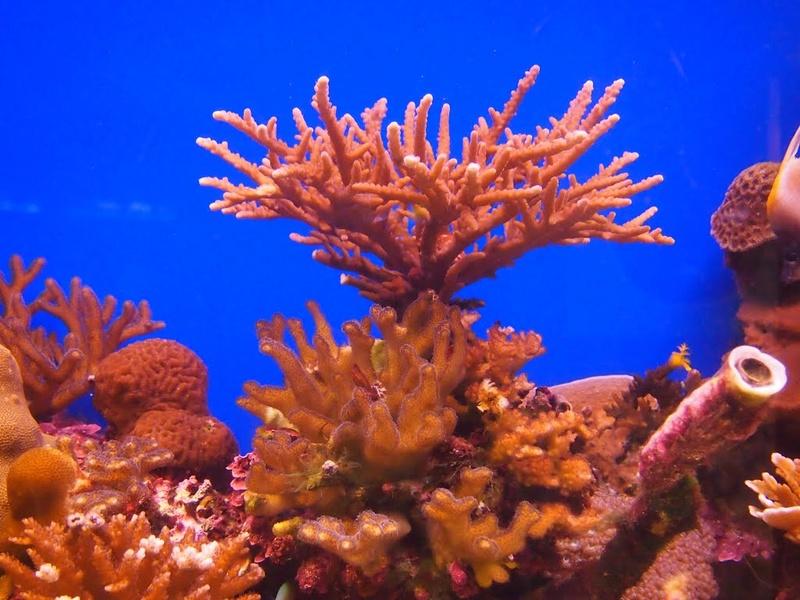 Podvodni svet (osim riba) - Page 5 Dno412