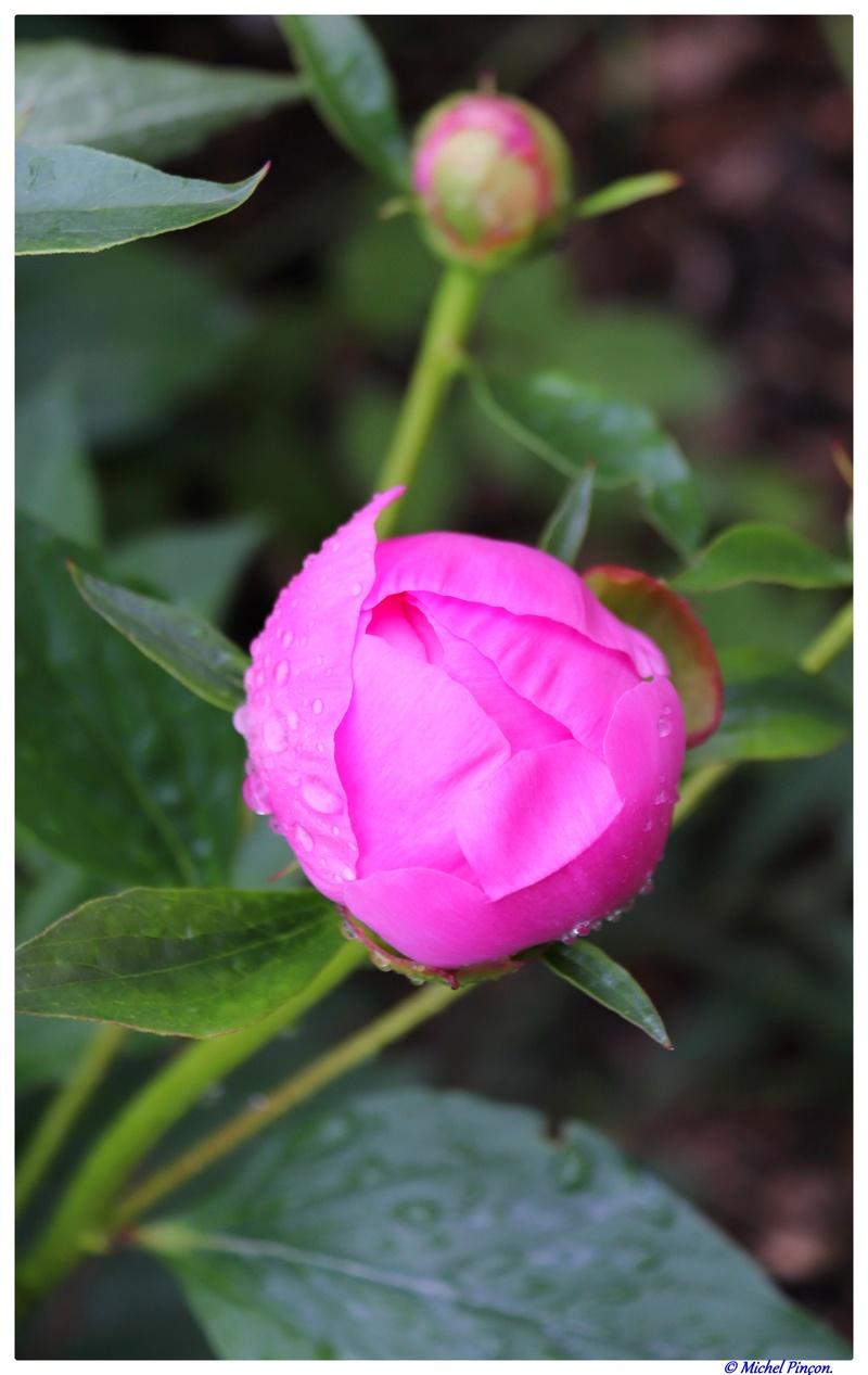 [Fil Ouvert] Fleurs - Page 21 Dsc01049