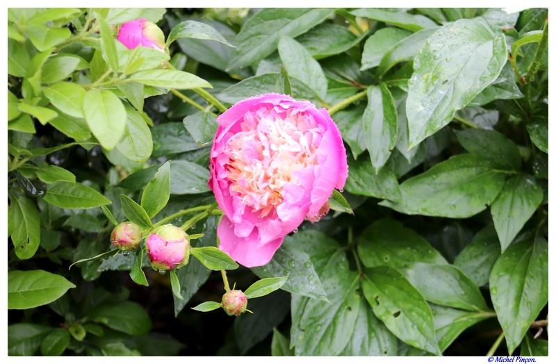 [Fil Ouvert] Fleurs - Page 21 Dsc01050