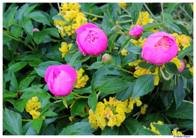 [Fil Ouvert] Fleurs - Page 21 Dsc01051