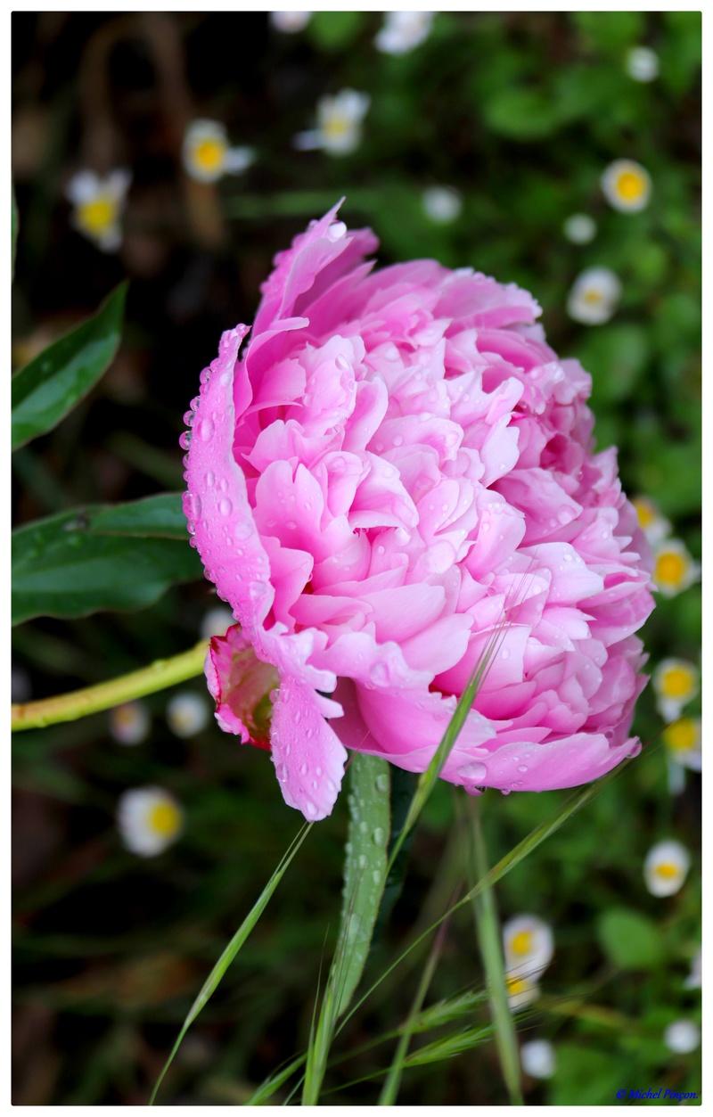 [Fil Ouvert] Fleurs - Page 21 Dsc01052