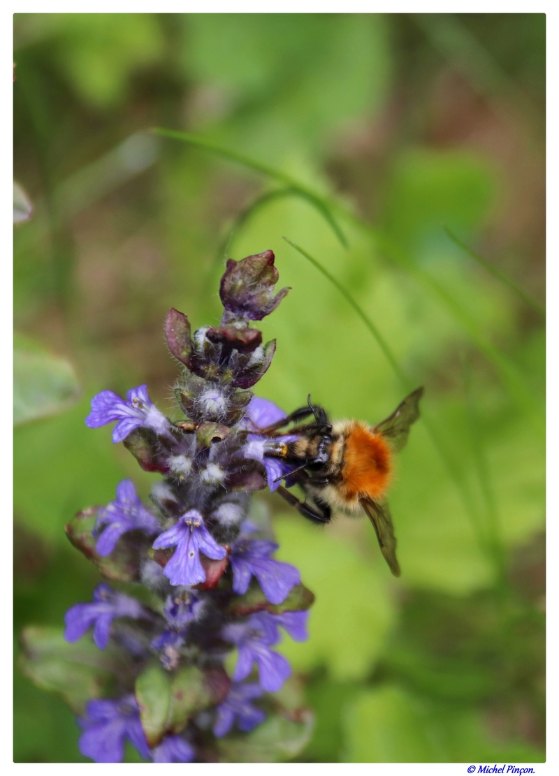 Insectes et Proxi. [Fil Ouvert] - Page 13 Dsc01362