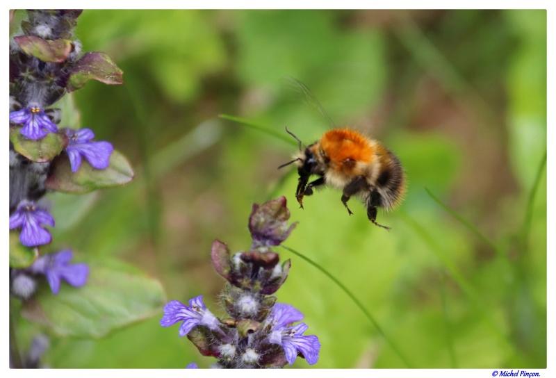 Insectes et Proxi. [Fil Ouvert] - Page 13 Dsc01363