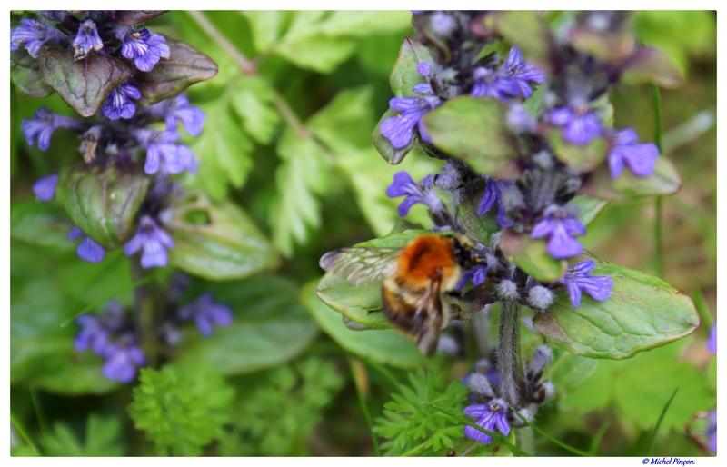 Insectes et Proxi. [Fil Ouvert] - Page 13 Dsc01365