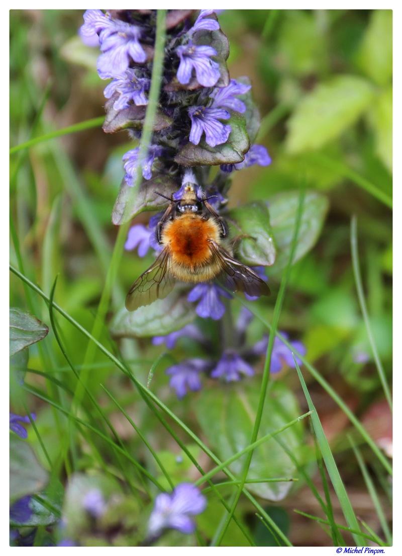 Insectes et Proxi. [Fil Ouvert] - Page 13 Dsc01366