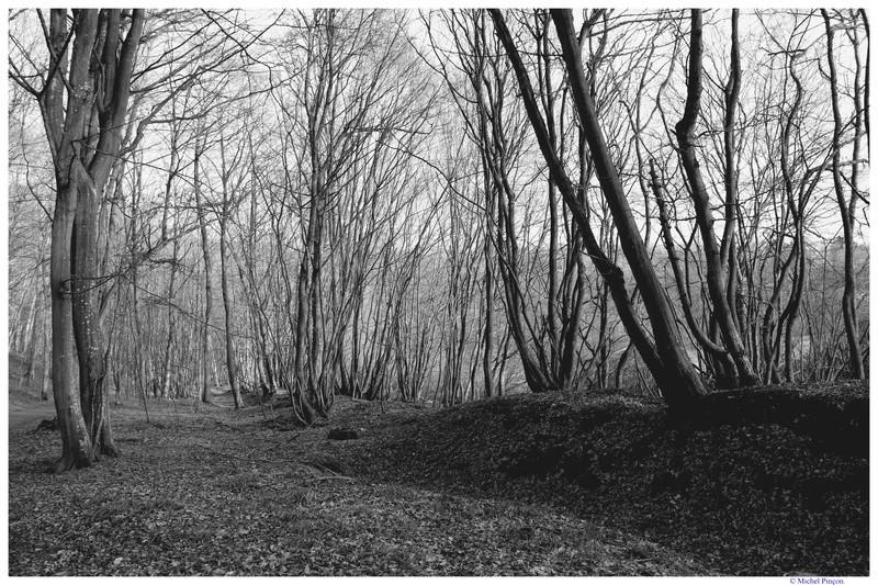 [fil ouvert] la forêt dans tous ses états - Page 17 Dsc01416