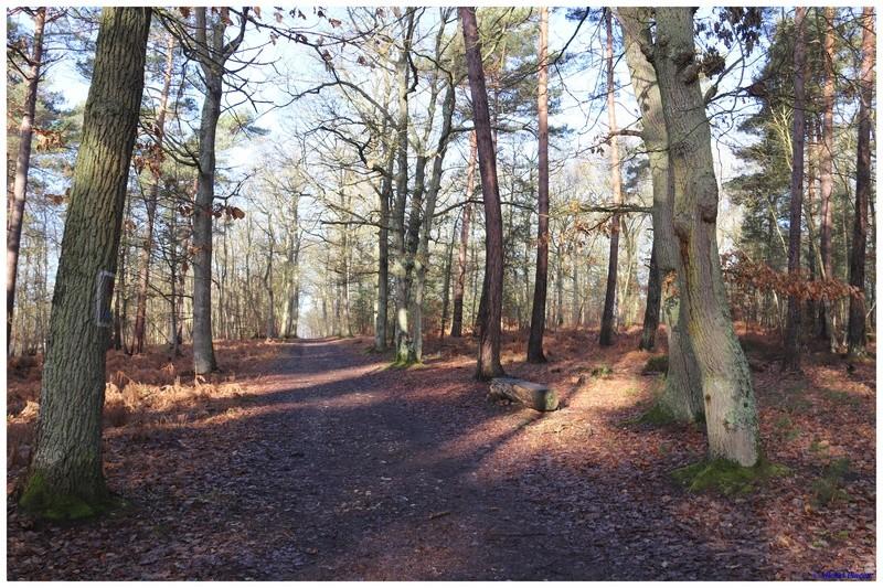 [fil ouvert] la forêt dans tous ses états - Page 18 Dsc01436