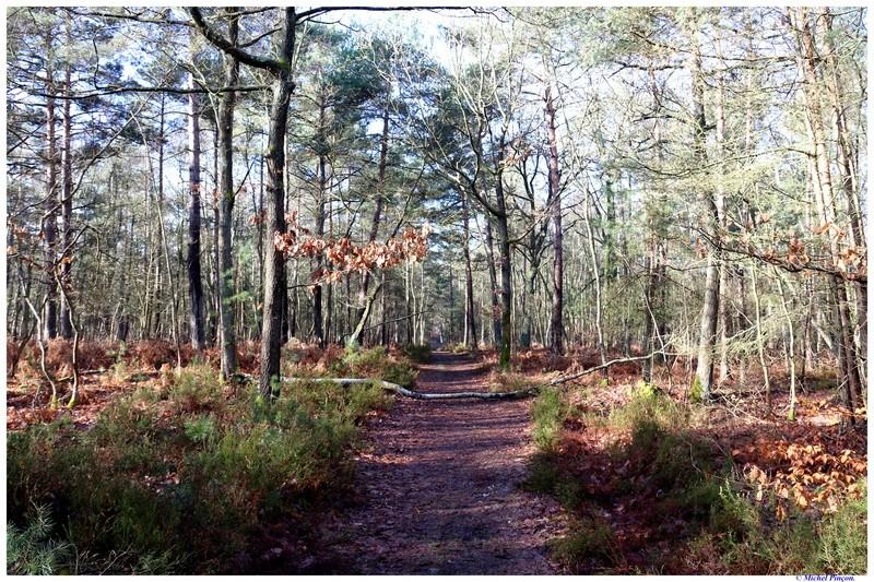 [fil ouvert] la forêt dans tous ses états - Page 18 Dsc01437