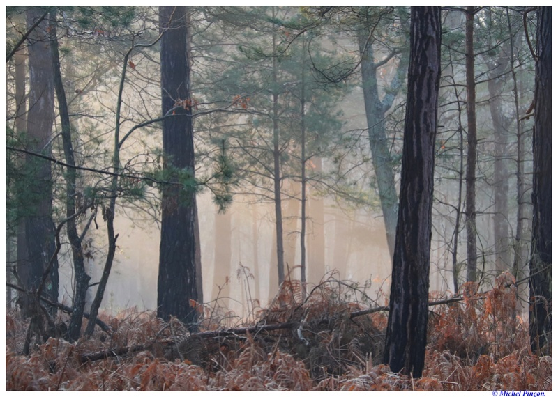 [fil ouvert] la forêt dans tous ses états - Page 18 Dsc01472