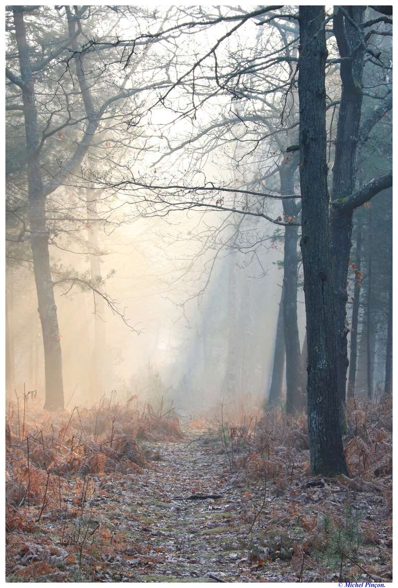[fil ouvert] la forêt dans tous ses états - Page 18 Dsc01473