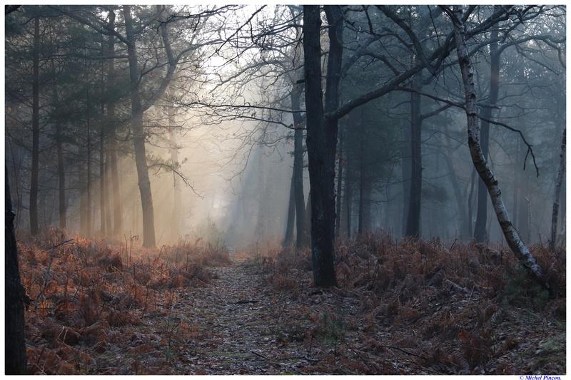 [fil ouvert] la forêt dans tous ses états - Page 18 Dsc01474