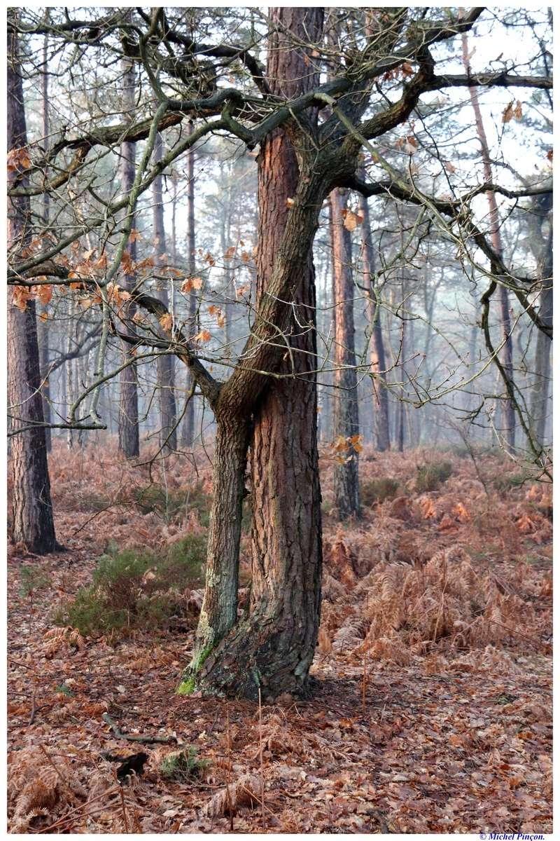 [fil ouvert] la forêt dans tous ses états - Page 18 Dsc01475