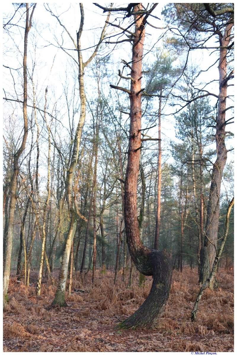 [fil ouvert] la forêt dans tous ses états - Page 18 Dsc01476