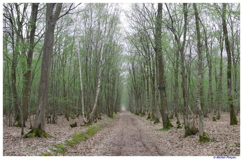 [fil ouvert] la forêt dans tous ses états - Page 18 Dsc01538