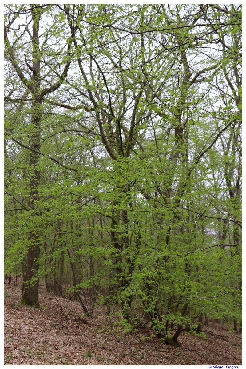 [fil ouvert] la forêt dans tous ses états - Page 18 Dsc01539