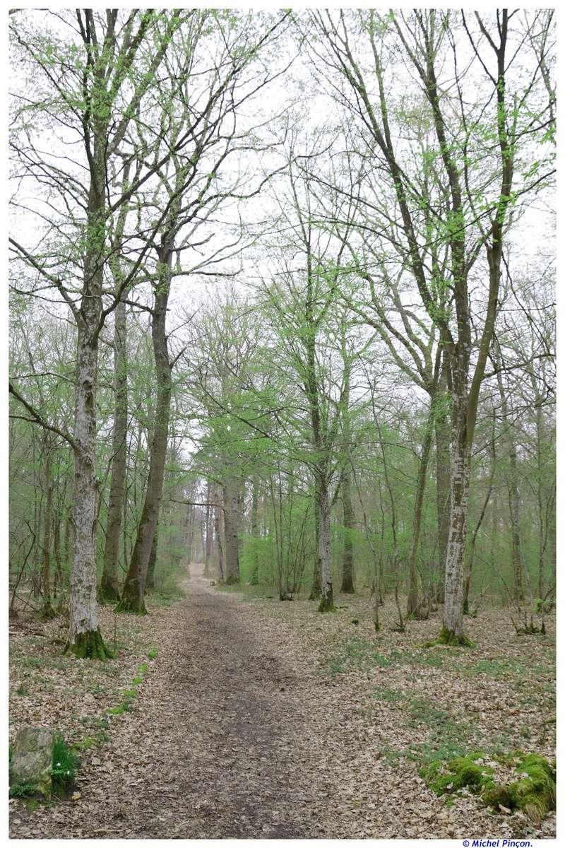 [fil ouvert] la forêt dans tous ses états - Page 18 Dsc01540