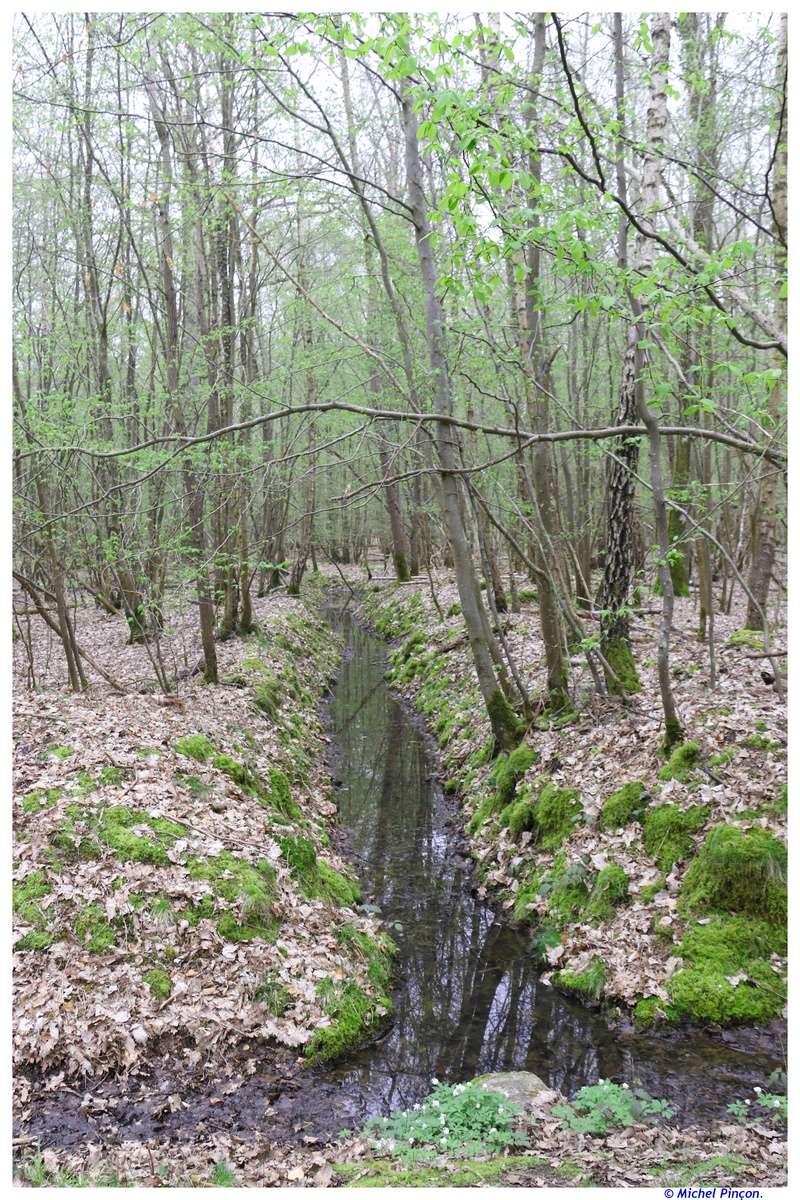 [fil ouvert] la forêt dans tous ses états - Page 18 Dsc01541