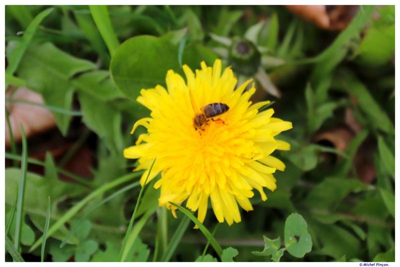 Insectes et Proxi. [Fil Ouvert] - Page 12 Dsc01559