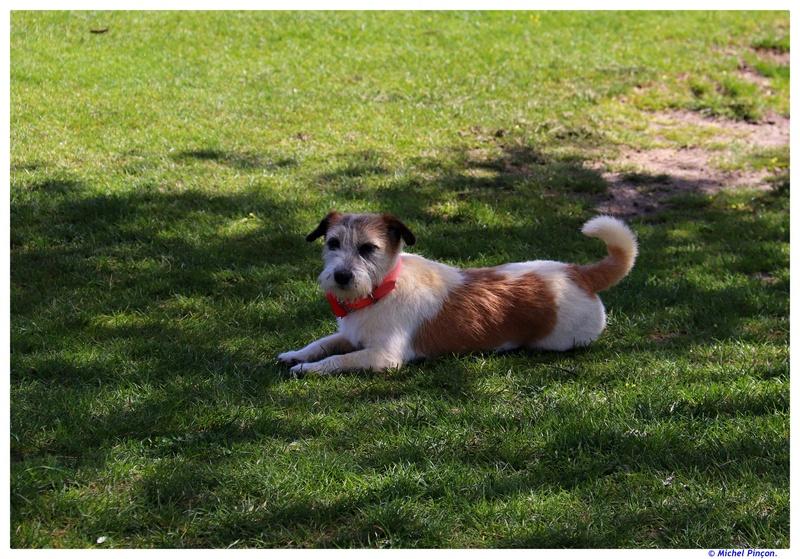 [fil ouvert] Les chiens, nos amis - Page 3 Dsc01569