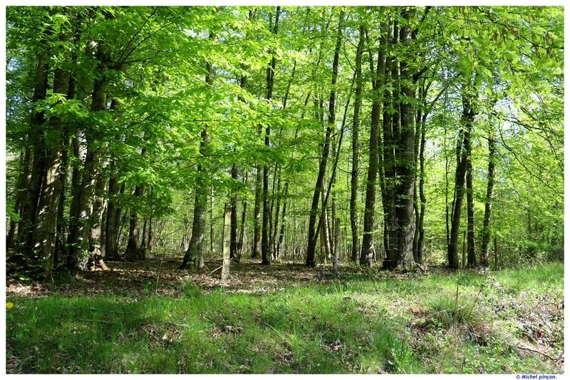 [fil ouvert] la forêt dans tous ses états - Page 19 Dsc01578