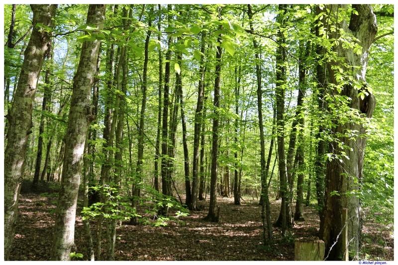 [fil ouvert] la forêt dans tous ses états - Page 19 Dsc01583