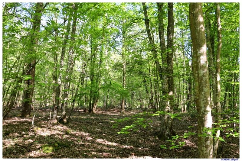 [fil ouvert] la forêt dans tous ses états - Page 19 Dsc01585