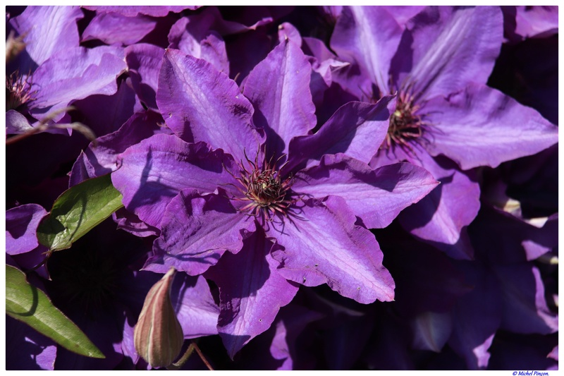 [Fil Ouvert] Fleurs - Page 21 Dsc01938