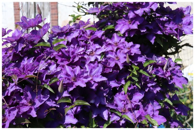 [Fil Ouvert] Fleurs - Page 21 Dsc01939