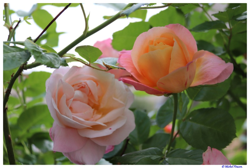 [Fil Ouvert] Fleurs - Page 21 Dsc01944