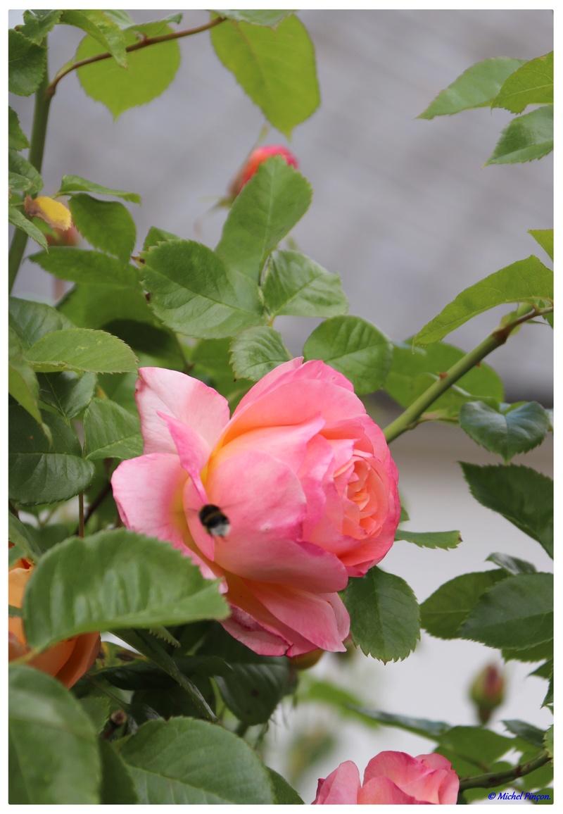 [Fil Ouvert] Fleurs - Page 21 Dsc01945