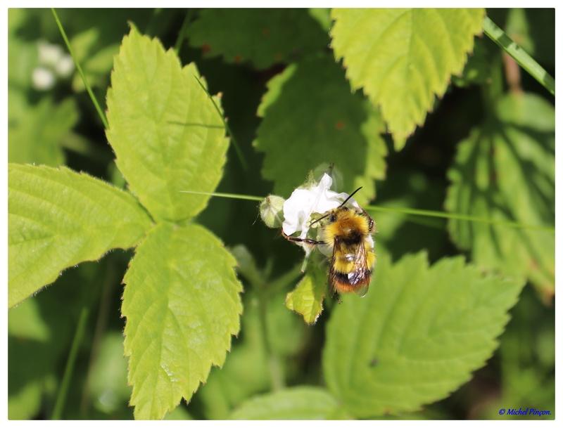 Insectes et Proxi. [Fil Ouvert] - Page 14 Dsc01948