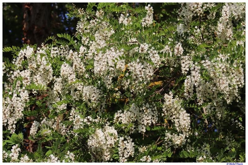 [Fil ouvert] Fleurs et plantes - Page 9 Dsc01950