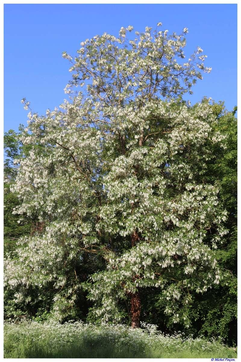[Fil ouvert] Fleurs et plantes - Page 9 Dsc01951