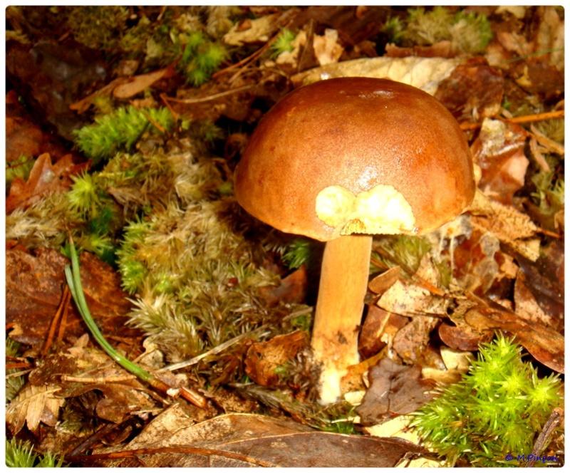 [fil ouvert] les champignons - Page 2 Dsc02087