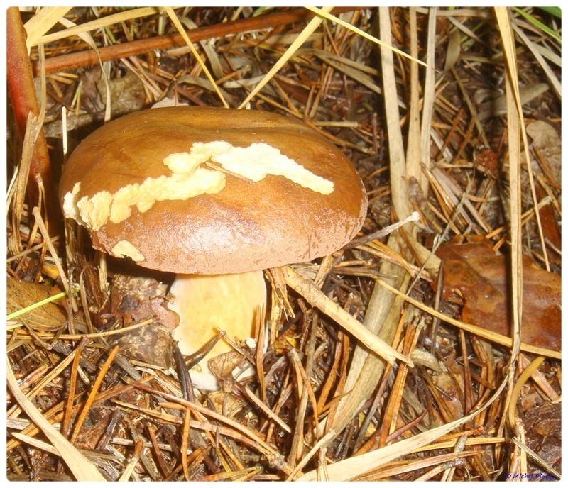 [fil ouvert] les champignons - Page 2 Dsc02099