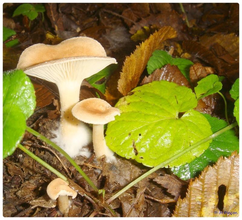 [fil ouvert] les champignons - Page 2 Dsc02102