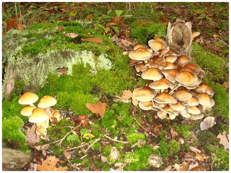 [fil ouvert] les champignons - Page 2 Dsc02107