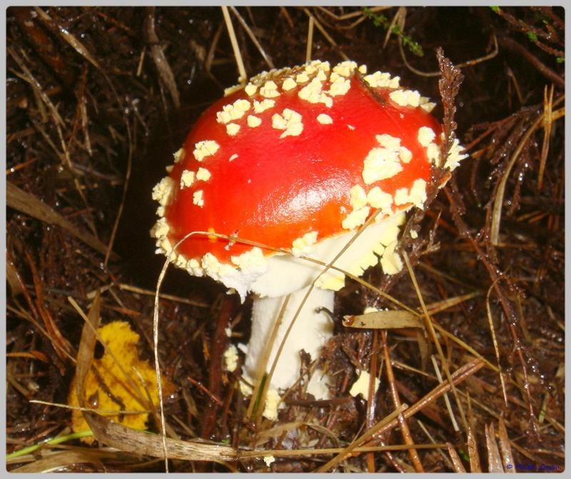 [fil ouvert] les champignons - Page 4 Dsc02108