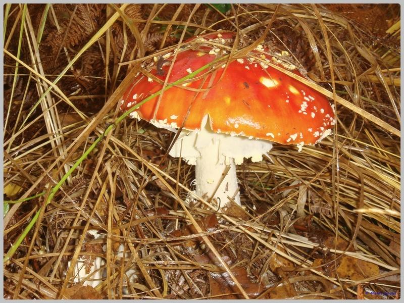 [fil ouvert] les champignons - Page 4 Dsc02109