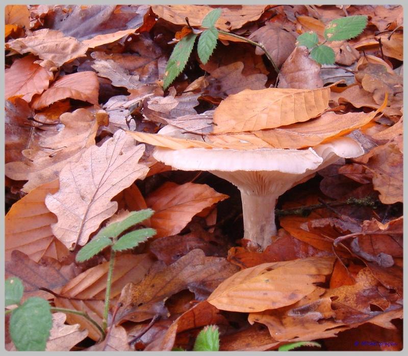[fil ouvert] les champignons - Page 5 Dsc02120