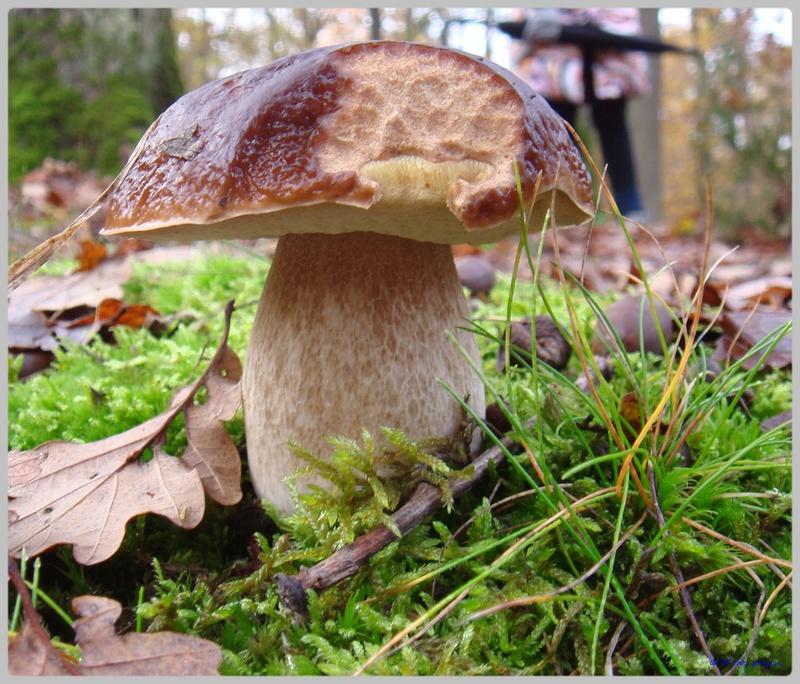 [fil ouvert] les champignons - Page 5 Dsc02123
