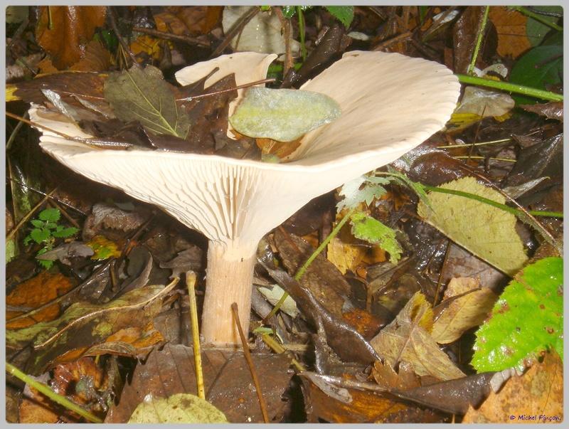 [fil ouvert] les champignons - Page 5 Dsc02124